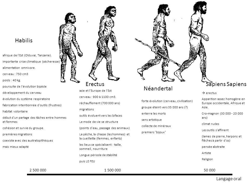 Habilis Erectus Sapiens Sapiens Néandertal Langage oral 2 500 000