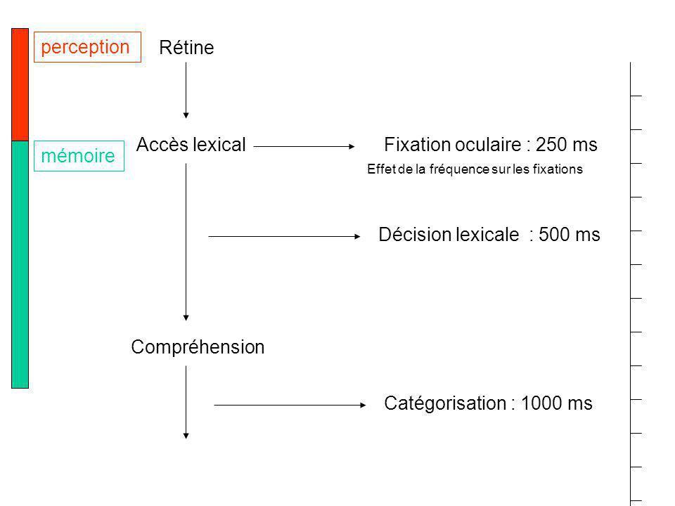 perception Rétine Accès lexical Fixation oculaire : 250 ms mémoire