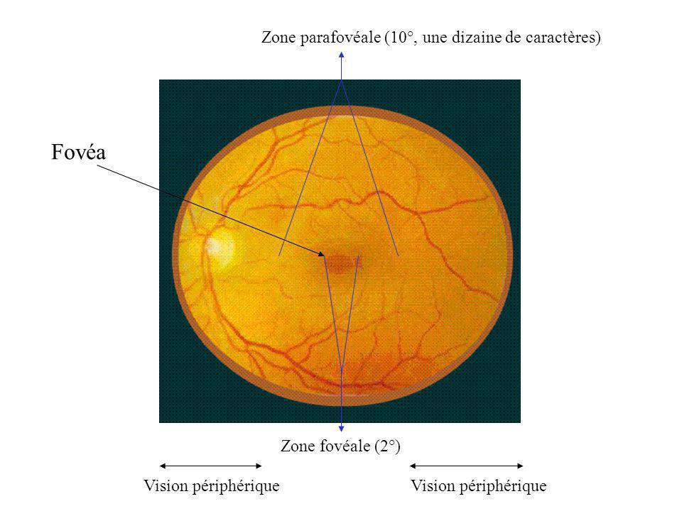 Fovéa Zone parafovéale (10°, une dizaine de caractères)