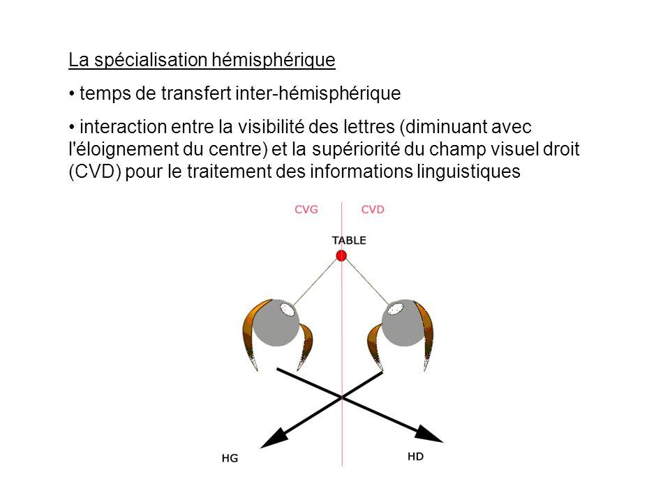 La spécialisation hémisphérique