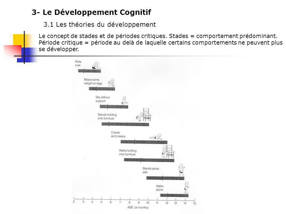 3- Le Développement Cognitif