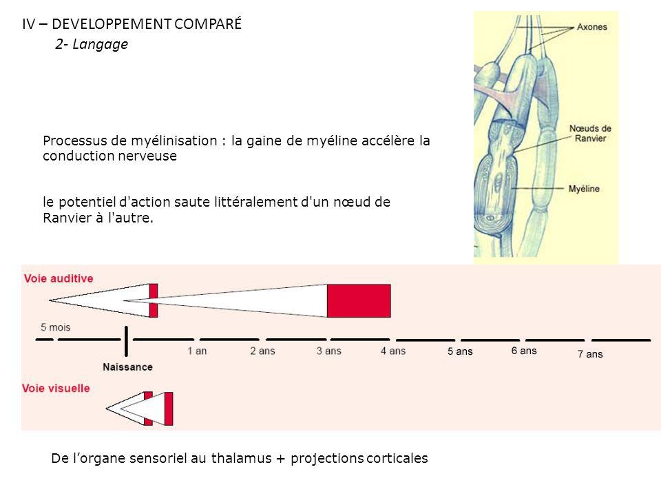 IV – DEVELOPPEMENT COMPARÉ 2- Langage