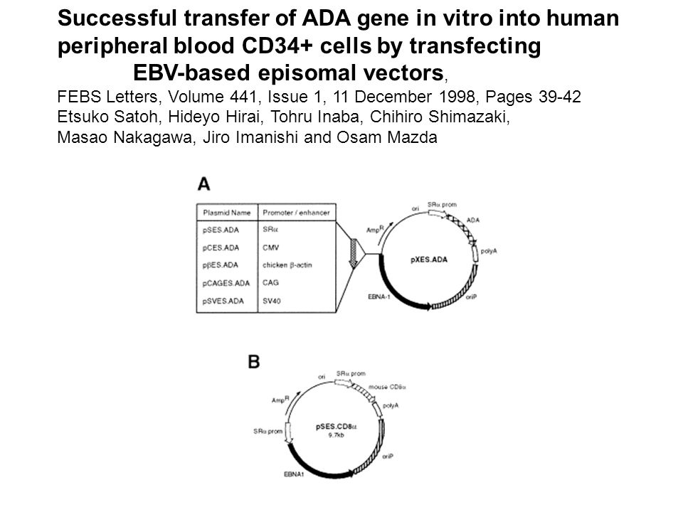 Successful transfer of ADA gene in vitro into human