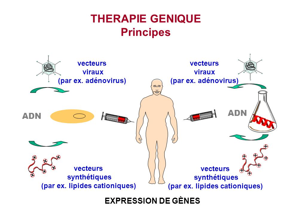 THERAPIE GENIQUE Principes