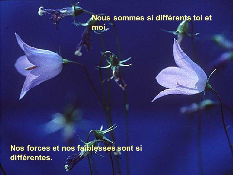 Nous sommes si différents toi et moi.