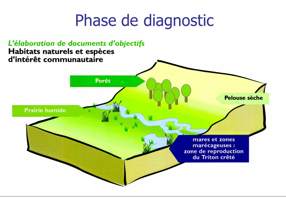 Phase de diagnostic