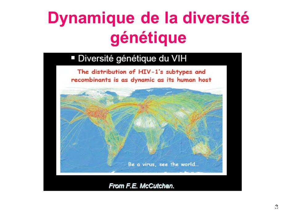Dynamique de la diversité génétique