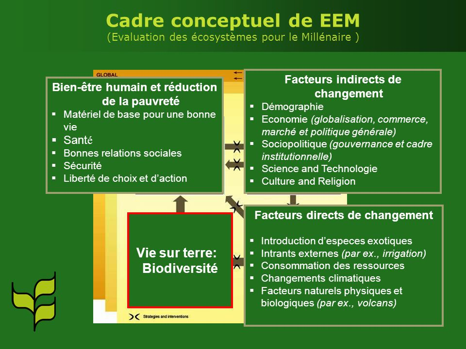 Cadre conceptuel de EEM (Evaluation des écosystèmes pour le Millénaire )