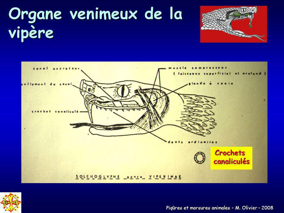 Organe venimeux de la vipère