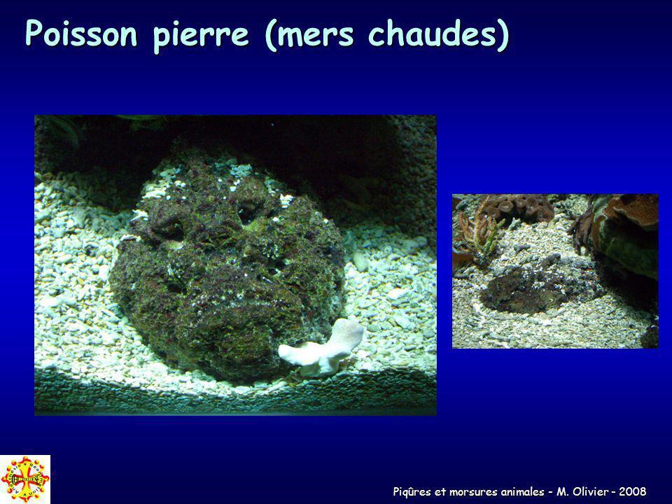 Poisson pierre (mers chaudes)