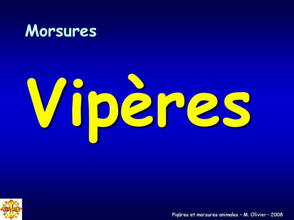 Morsures Vipères