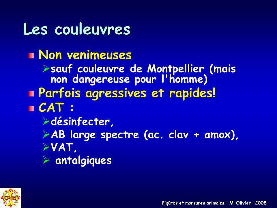 Les couleuvres Non venimeuses Parfois agressives et rapides! CAT :