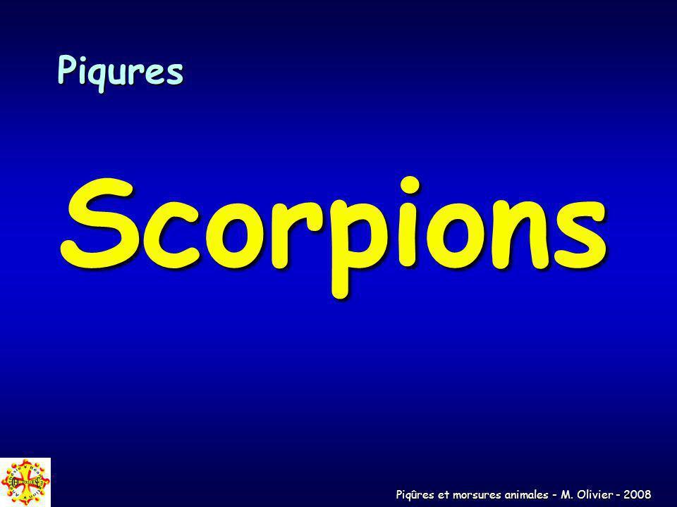 Piqures Scorpions