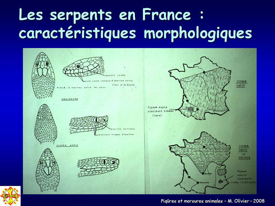 Les serpents en France : caractéristiques morphologiques