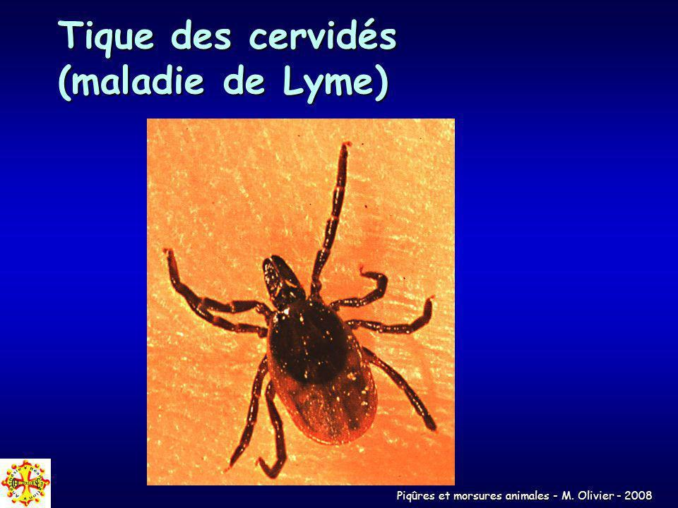 Tique des cervidés (maladie de Lyme)