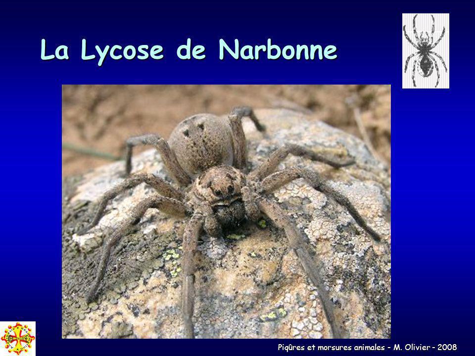 La Lycose de Narbonne