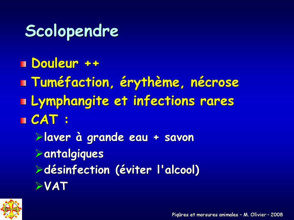 Scolopendre Douleur ++ Tuméfaction, érythème, nécrose
