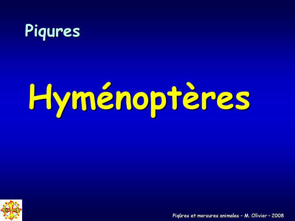 Piqures Hyménoptères