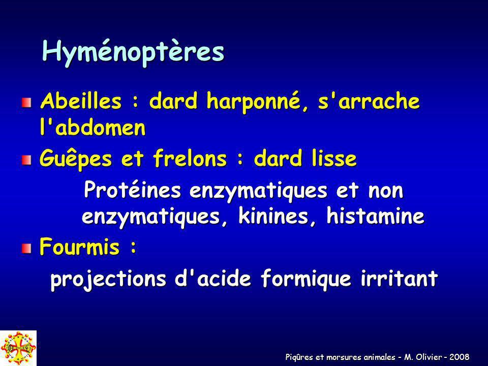 Hyménoptères Abeilles : dard harponné, s arrache l abdomen