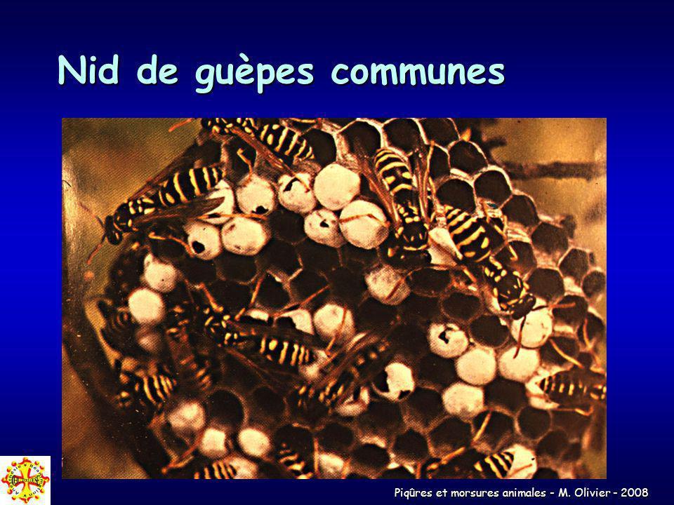 Nid de guèpes communes
