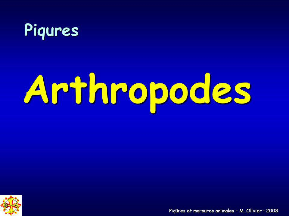 Piqures Arthropodes