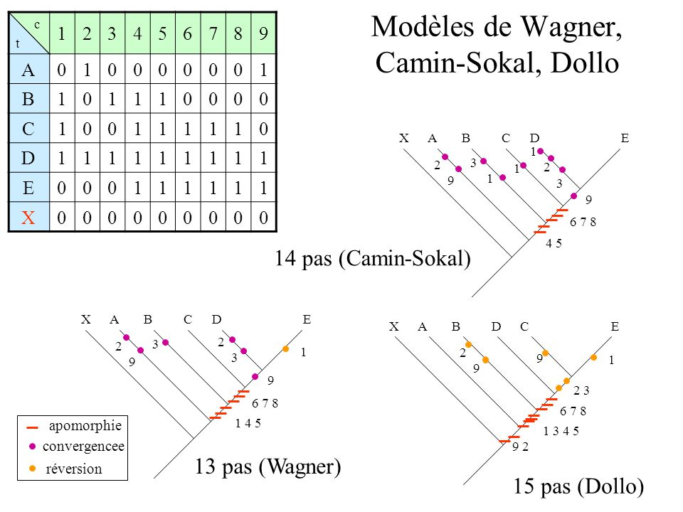 Modèles de Wagner, Camin-Sokal, Dollo