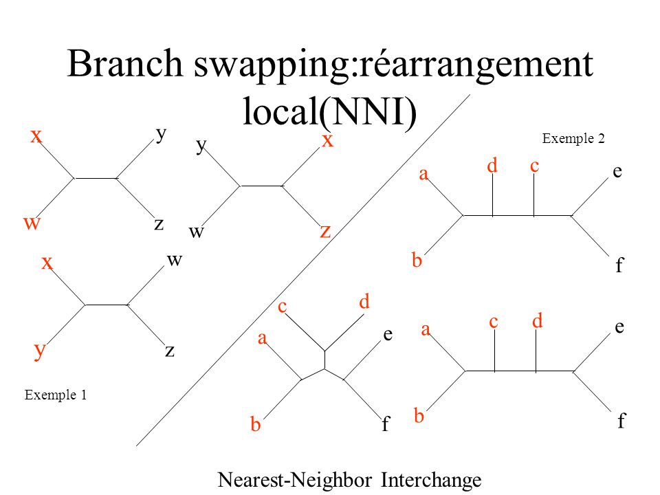 Branch swapping:réarrangement local(NNI)