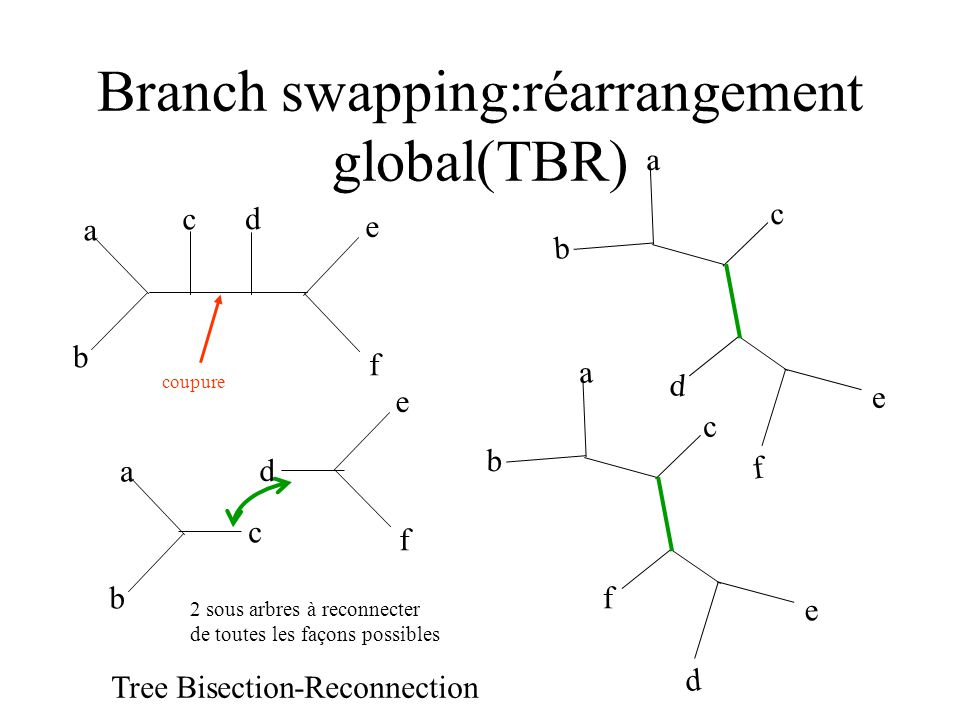 Branch swapping:réarrangement global(TBR)