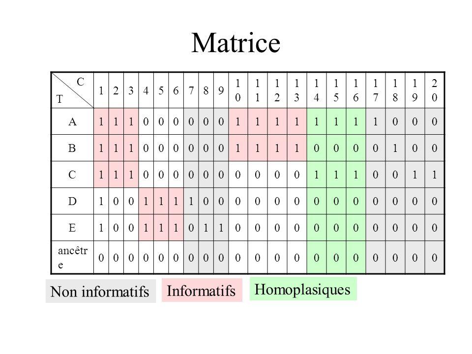 Matrice Non informatifs Informatifs Homoplasiques C T 1 2 3 4 5 6 7 8