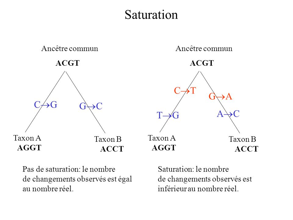 Saturation CT GA CG GC AC TG Taxon A AGGT Taxon B ACCT