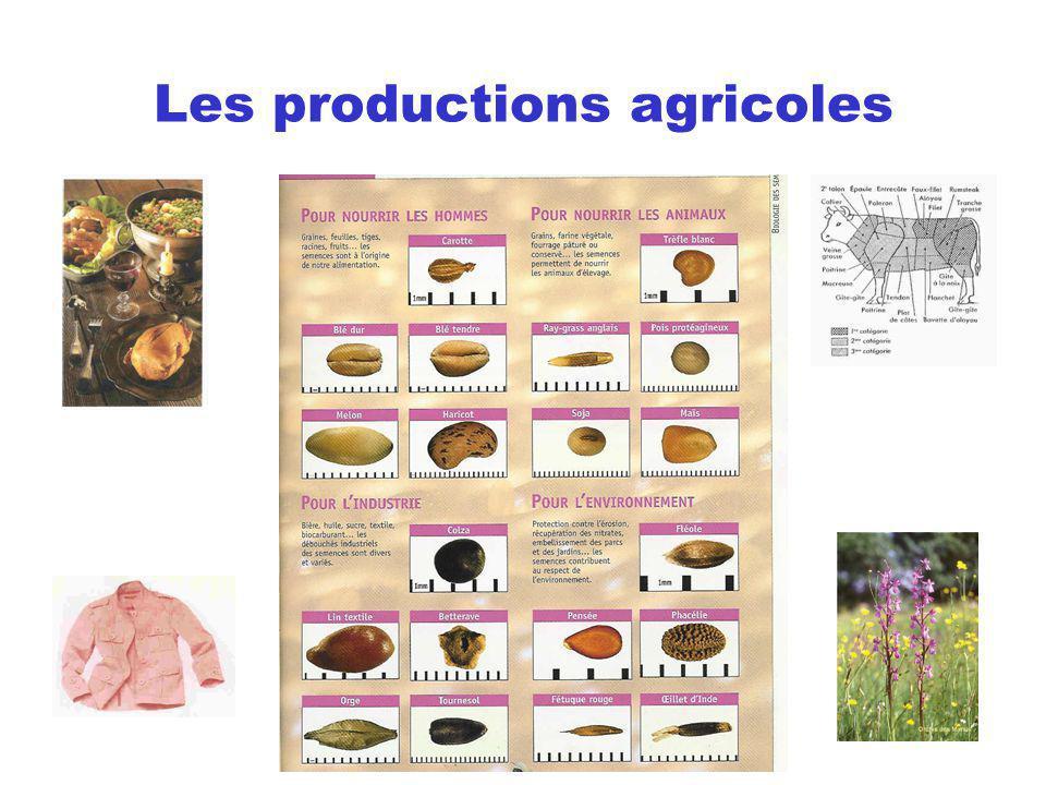 Les productions agricoles