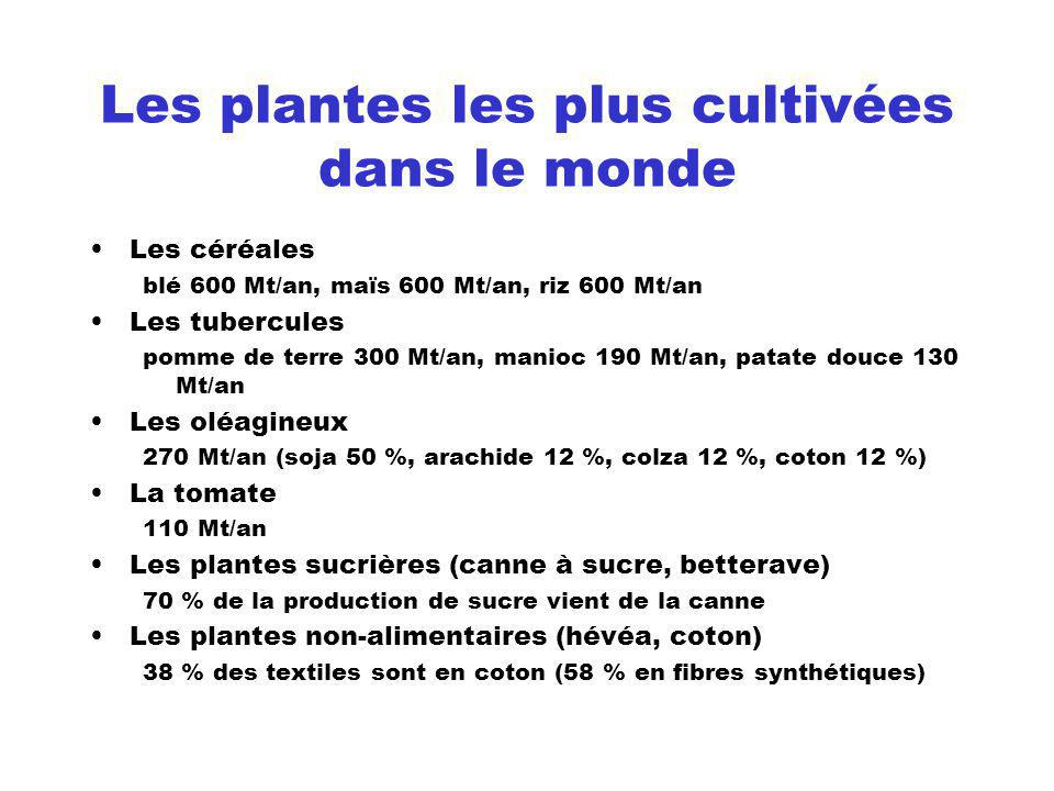 Les plantes les plus cultivées dans le monde