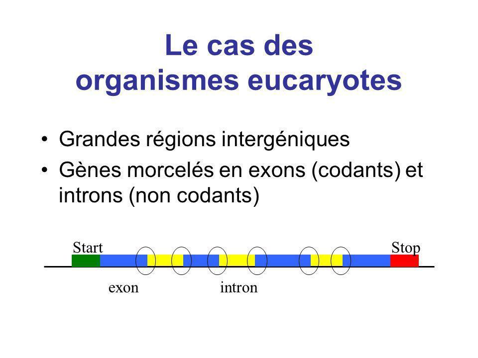 Le cas des organismes eucaryotes