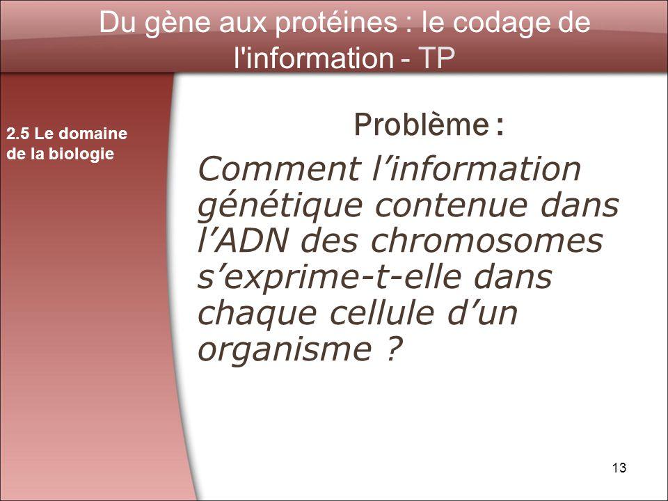 Du gène aux protéines : le codage de l information - TP