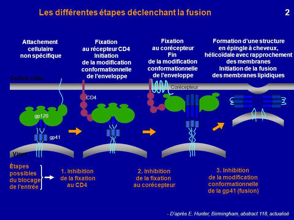 Les différentes étapes déclenchant la fusion 2