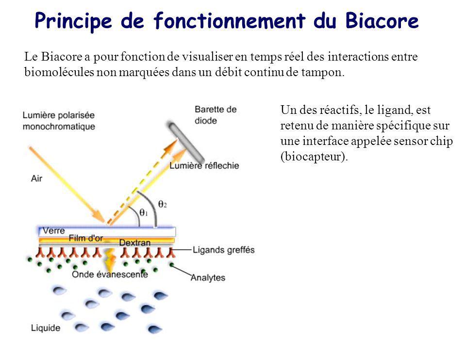 Principe de fonctionnement du Biacore