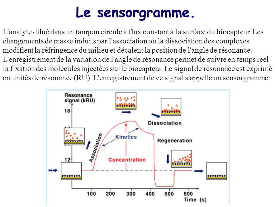 Le sensorgramme.