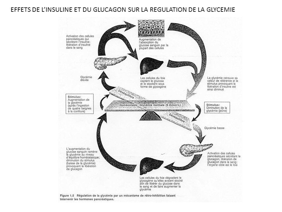 EFFETS DE L'INSULINE ET DU GLUCAGON SUR LA REGULATION DE LA GLYCEMIE