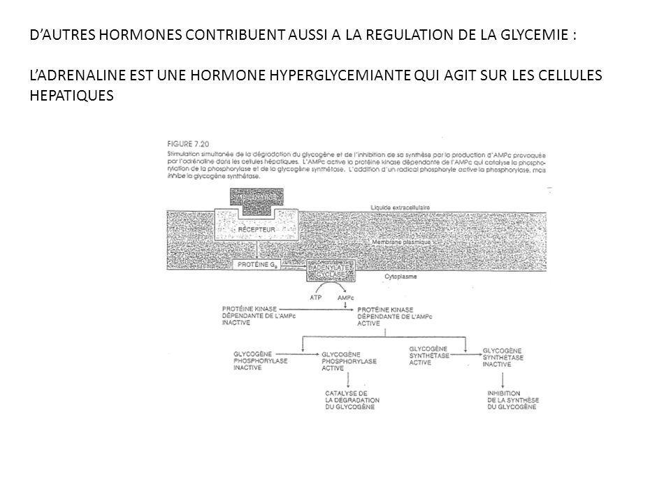 D'AUTRES HORMONES CONTRIBUENT AUSSI A LA REGULATION DE LA GLYCEMIE :