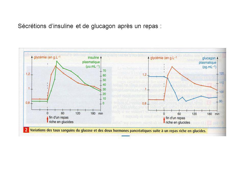 Sécrétions d'insuline et de glucagon après un repas :