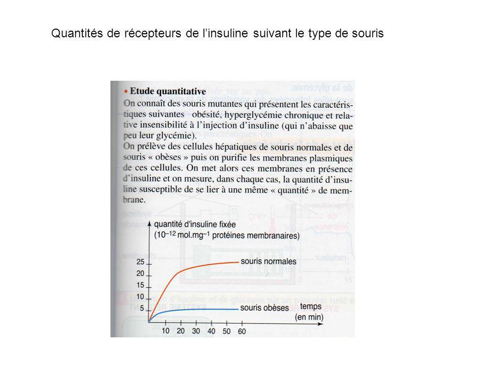 Quantités de récepteurs de l'insuline suivant le type de souris