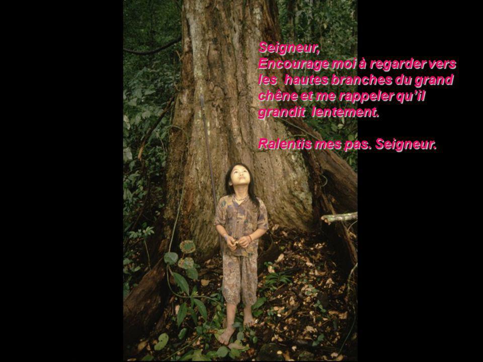 Seigneur, Encourage moi à regarder vers. les hautes branches du grand. chêne et me rappeler qu'il.