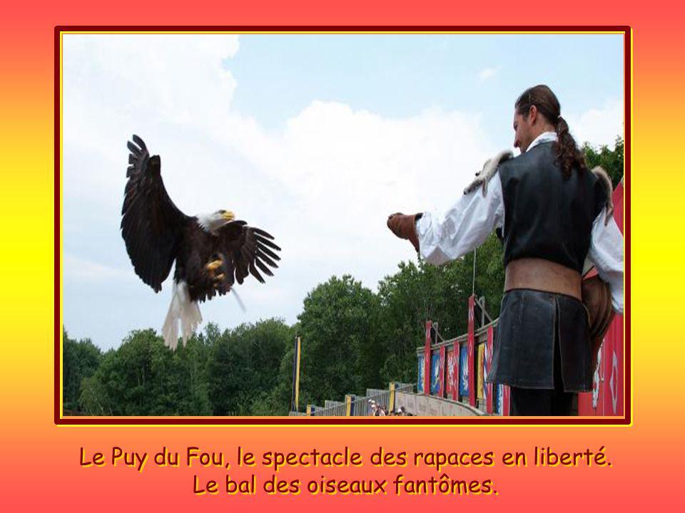 Le Puy du Fou, le spectacle des rapaces en liberté