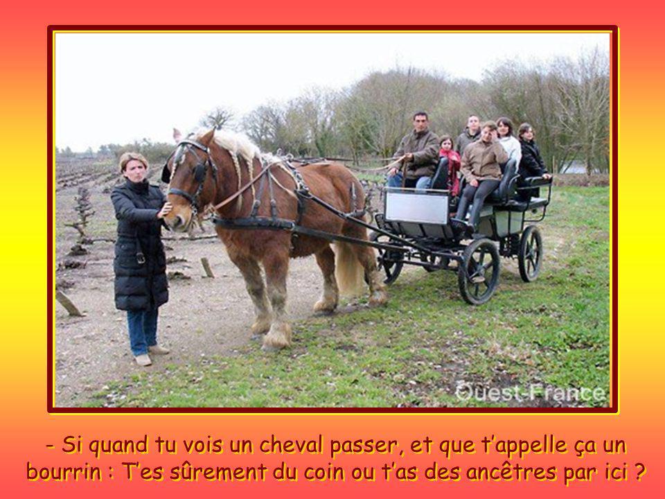 - Si quand tu vois un cheval passer, et que t'appelle ça un bourrin : T'es sûrement du coin ou t'as des ancêtres par ici