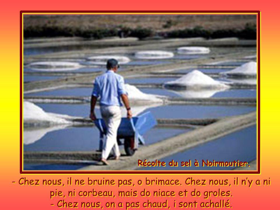 Récolte du sel à Noirmoutier.