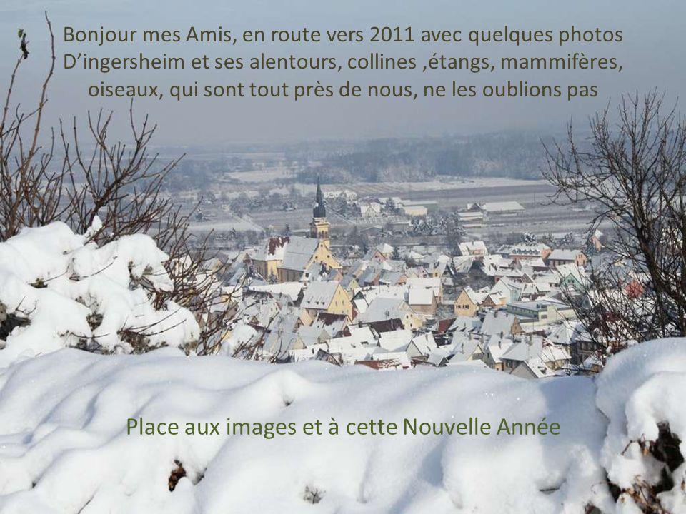 Place aux images et à cette Nouvelle Année