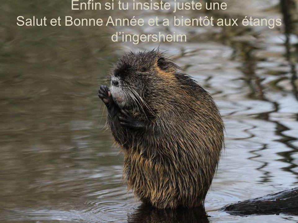 Enfin si tu insiste juste une Salut et Bonne Année et a bientôt aux étangs d'ingersheim