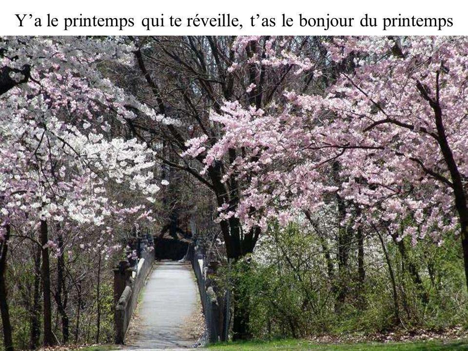 Y'a le printemps qui te réveille, t'as le bonjour du printemps