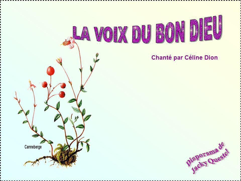 LA VOIX DU BON DIEU Chanté par Céline Dion Diaporama de Jacky Questel