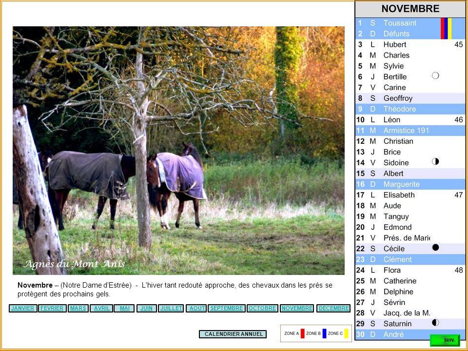 Agnès du Mont Anis Novembre – (Notre Dame d'Estrée) - L hiver tant redouté approche, des chevaux dans les prés se protègent des prochains gels.